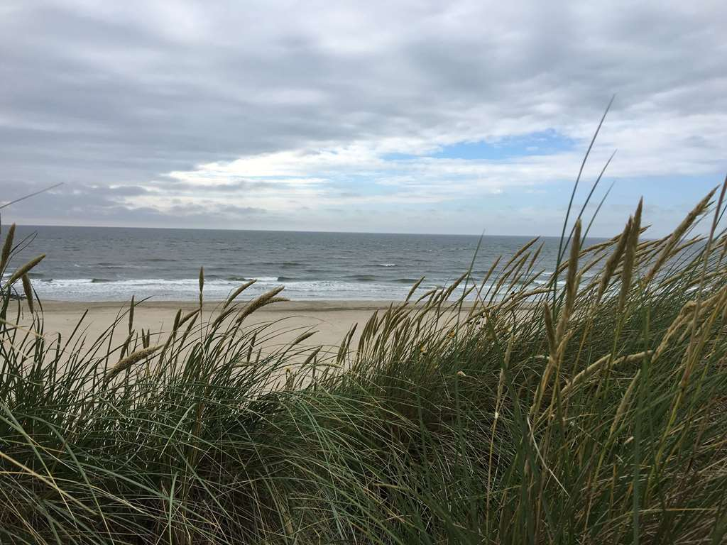 A walk in the dunes in Holland